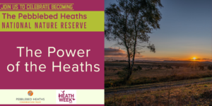 The Power of the heaths - HEATH WEEK @ online