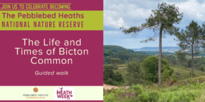 The life and times of Bicton Common - HEATH WEEK @ Four Firs car park
