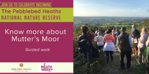 Find out more about Mutter's Moor - HEATH WEEK @ Mutter's Moor car park