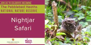 Nightjar safari (Dalditch) - HEATH WEEK @ Squabmoor parking area
