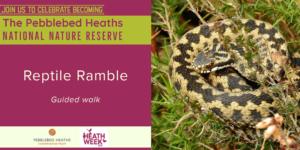 Reptile Ramble - HEATH WEEK @ Uphams car park